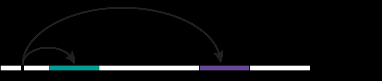 pqtl diagram