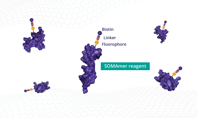 SOMAmer reagents are synthesized with a fluorophore, photocleavable, and biotin