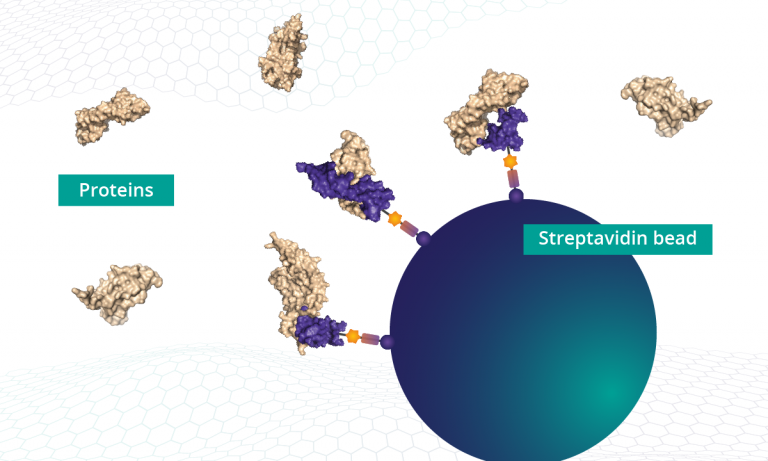 The SOMAmer reagents bound to streptavidin beads are used to capture proteins from a biological sample