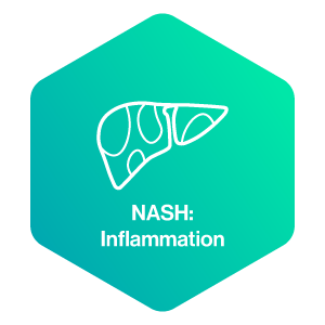 NASH: Inflammation